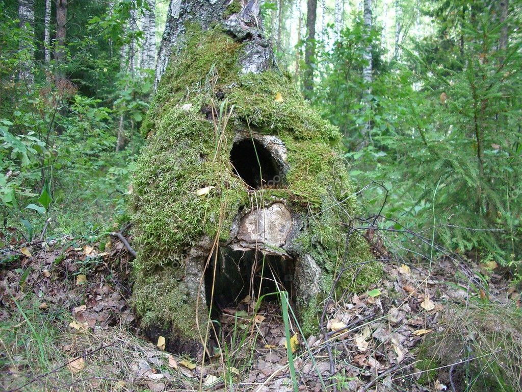 Creux de la for t maison la base dun tronc darbre - Maison en tronc d arbre ...