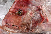 Red Porgy Fish — Stock Photo