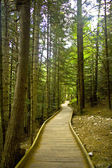 Path between forest — Stock Photo