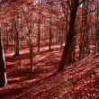 Autumn colors — Stockfoto #10219591