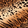 Tiger Cheetah Print Background — Stock Photo
