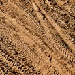 Mountain Bike Tracks - Stock Photo