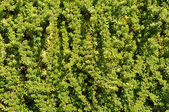 Green Plant Background — Stock Photo