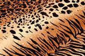 Tiger Cheetah Print Background — Stock Photo