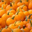 Pumpkins — Stock Photo #10091233