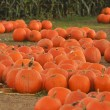 Pumpkin Patch — Stock Photo #10091237