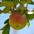 Stock Photo: Red Apple on Tree