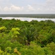 Stock Photo: Rain Forest and Lagoon View in CostRica