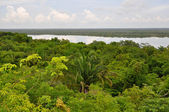 Rain Forest and Lagoon View in Costa Rica — Stock Photo
