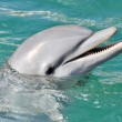 Dolphin Smiling Close Up — Stock Photo #9937725