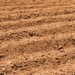 Close Up of Plowed Dirt — Stock Photo #9941248