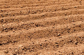 Close Up of Plowed Dirt — Stock Photo