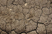 Cracked Mud or Dirt used as a Background — Stock Photo
