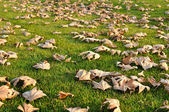 Dried Leaves on Green Grass — Stock Photo