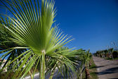 Palm slip — Stock Photo