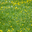 Green yellow flowers — Stock Photo #9952988