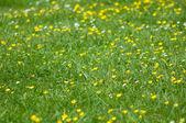 Groene gele bloemen — Stockfoto