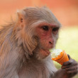 Monkey Eating Ice-Cream — Stock Photo