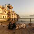 Royalty-Free Stock Photo: Lake Palace with Cows in front