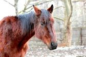 Red horse — Stock Photo
