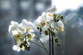 Orchid house — Foto Stock