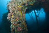 The Liberty Wreck — Stock Photo