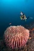 Diver over barrel sponge — Stock Photo