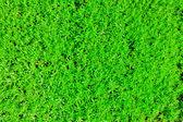 A green vegetation of a grass — Stock Photo