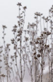Frost covered plant — Stockfoto
