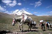 Himalaya Views — Stock Photo