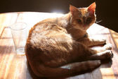 Feline Aura — Stock Photo