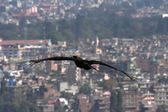 Welcome to Kathmandu — Stock Photo