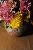 Flowers, asters — Stock Photo