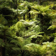 New Zealand bush — Stock Photo