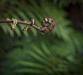 ветвь папоротника — Стоковое фото