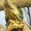 Lizard — Stock Photo #10045253