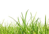 Fresh-spring-green-grass-on-white-background--space-for-text — Stock Photo