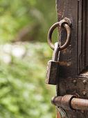 Old Padlock in a wooden door — Stock Photo