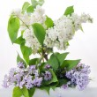 Lilacs — Stock Photo #10075551
