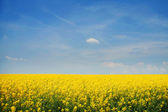 Mustard — ストック写真