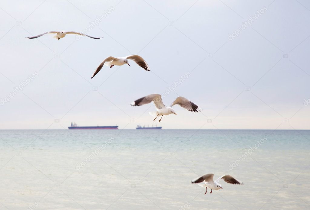 Seagulls flying in the sky with outstretched wings. — Stock Photo #10106373