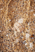 Mollusk - brine — Stock Photo