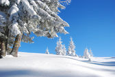 Snowy mountain forest — Stock Photo