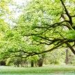 Tree, park — Stock Photo #10094817