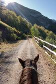 Equitazione — Foto Stock