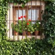 Stock Photo: Flowery window