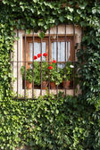 Flowery window — Stock Photo