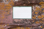 Mossy stone where you can write down your ideas — Stock Photo