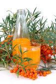 Sallow thorn juice 07 — Stock Photo
