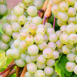 Grape white 08 — Stock Photo